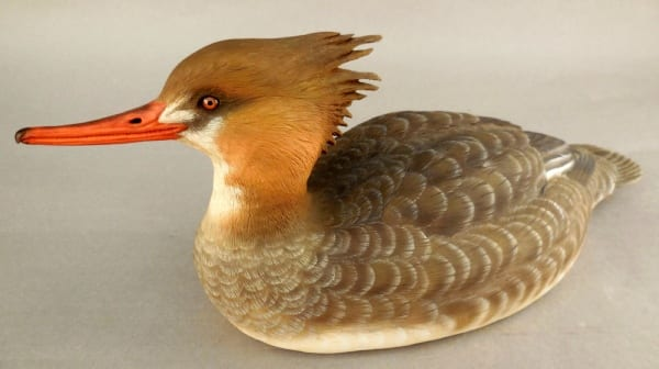 Red Breasted Merganser Hen by Ed Bowler
