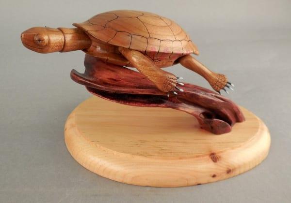 Turtle by Steve Notta
